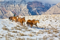 TWE_MG_6114-5.jpg  North America; USA, Wyoming; Shell, Big Horn Mountains: Horse Drive Through the Snow in the Big Horn Mountains